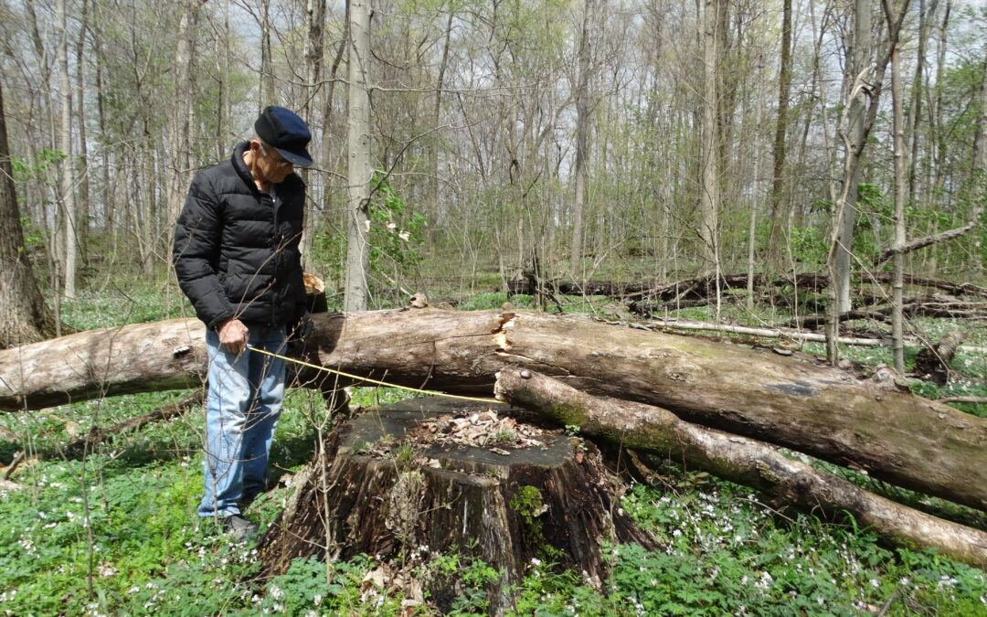 Missionaries Want Woods Preserved